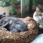 猫写真館:ぢょりさまとディーナ