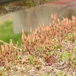 2014/4/18 4度目の春と初体験。今年自走初訪問福島ツー その2 紅枝垂地蔵桜