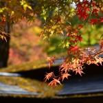 2014/11/13-14極寒の初尽くし西行ツーリング その4 紅葉の香嵐渓