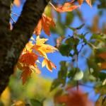 2014/10/24 セカンドカメラの実力拝見Nikon 1 v1とCanon Powershot S120撮り比べ その2 景信山から高尾山6号路