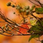 カワサキ公式LINEスタンプ!と2014/11/7 苦行鍋割山とヒトミン山ごはんレシピその3豆でっぽう風胡麻坦々リゾット