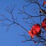 2014/11/21 さようなら秋・・・まったり奥多摩周遊道路ツー~玉堂美術館の大イチョウとヒトミンの山ごはんレシピその5 鳥ガラスープのリゾット