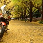 2014/11/28 神宮外苑イチョウ並木とミ・エスト