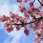 2015/2/20 桜咲く 熱海まったりツーリング その1 熱海桜満開