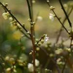 2015/2/20 桜咲く 熱海まったりツーリング その2 熱海梅園