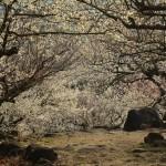 2015/3/17 火曜猛暑女ミユ屋と筑波山登山 その3