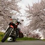 今シーズン最初で最後の桜ツー(´Д⊂ヽ その2 桜めぐり