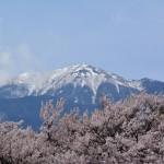 2016年4月8日 エスト・ミオ初京浜脱出。山梨桜めぐりツー その2 実相寺の神代桜