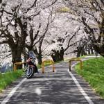 2018/3/30 吉見町さくら堤公園と入間川