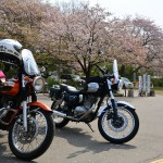 2018/4/3 エスト・エストで行く権現堂桜堤珍道中
