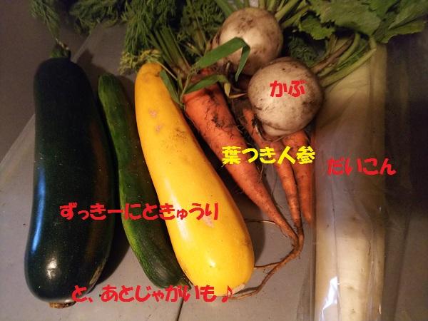 あやん畑とれたて野菜をいただきました♪