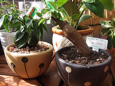 鉢がかわいい植物たち