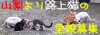 愛を乞う猫